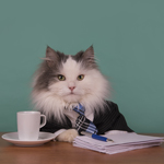Cat dressed as a business man